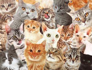 Пиар на котиках
